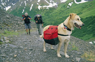 Dog friendly cabins and trails at Mt. Rainier